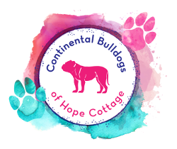 Continental Bulldogs of Hope Cottage